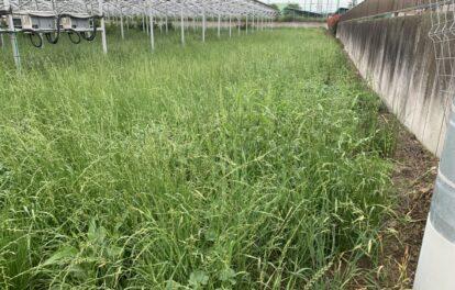 太陽光メンテナンス 草刈り