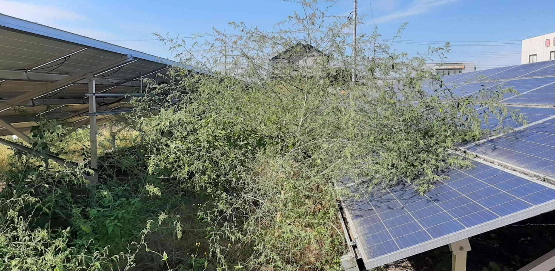 太陽光 草刈り